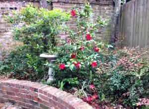 birdbath and roses